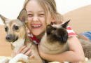 Budget Pet World's New Year's Sale Gives You Great Savings To Start The Year Right